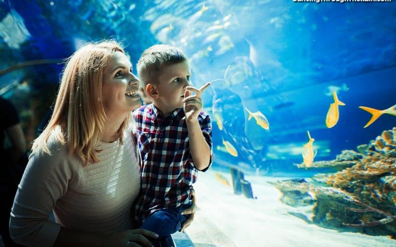 Mom at the Aquarium with her son