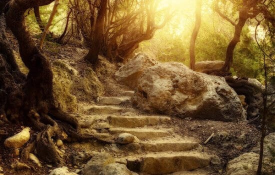 A bunch of brown stone steps in the forest surrounded by trees with no leaves and a light coming through the top of the stairs